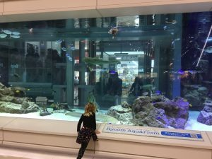 AQuarium at Rycom Mall
