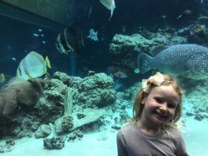OKinawa Aquarium tour