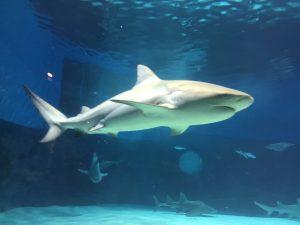 SHark Okinawa Aquarium