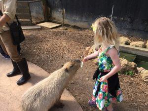 Ellie Feeding a Capybara