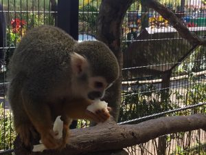 Feeding Monkey at Southeast Botanical Gardens