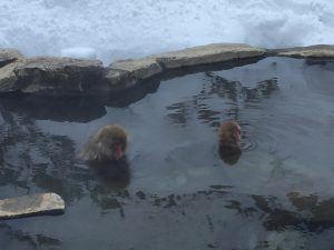 monkeying around in Onsen